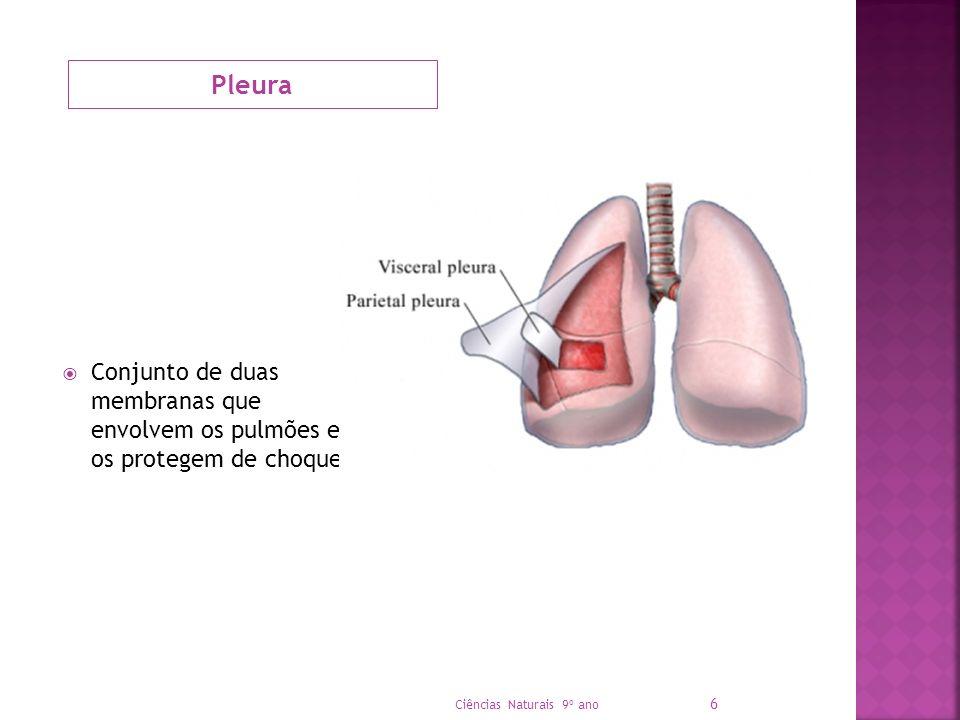 Pleura Conjunto de duas membranas que envolvem os pulmões e os protegem de choques.