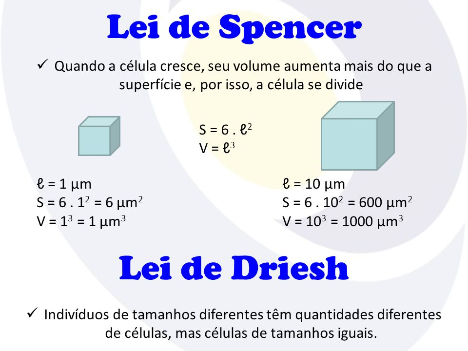 Lei de Spencer Lei de Driesh
