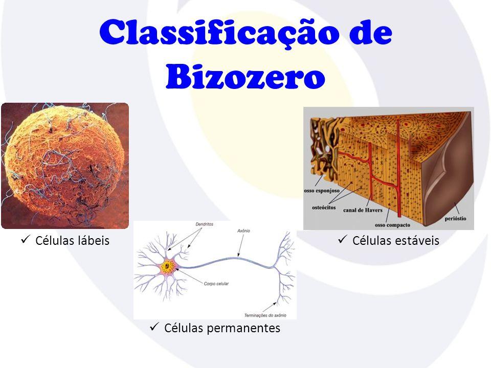 Classificação de Bizozero