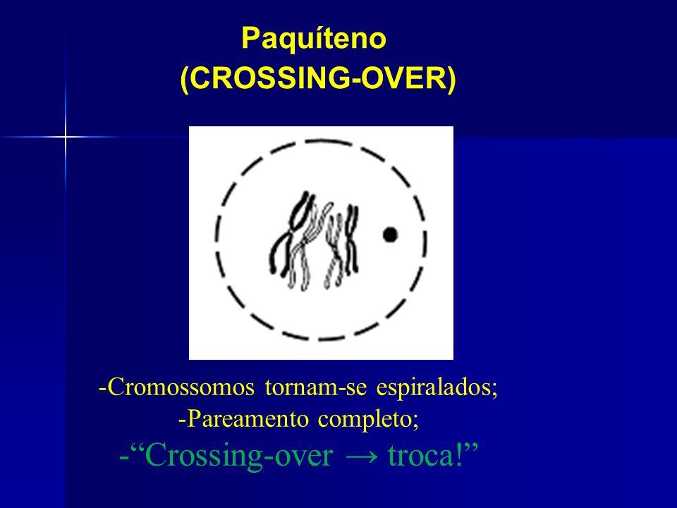 Crossing-over → troca!
