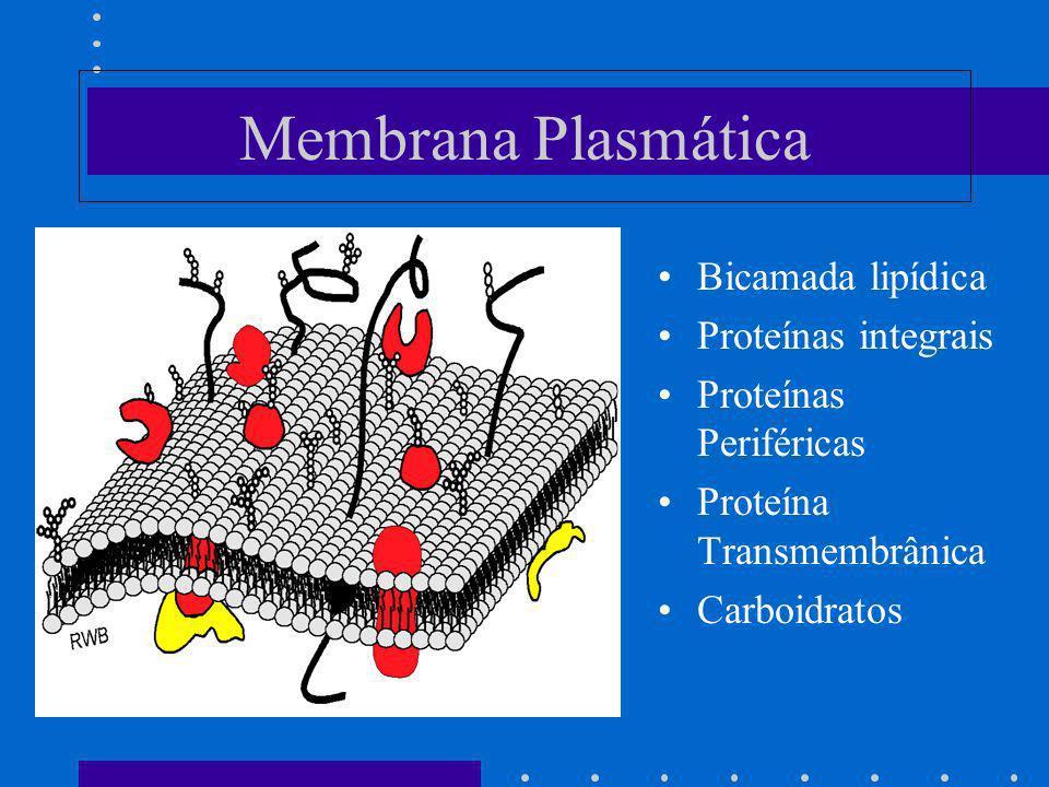 Membrana Plasmática Bicamada lipídica Proteínas integrais