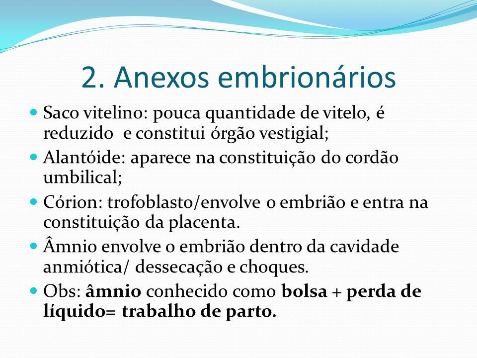 2. Anexos embrionários Saco vitelino: pouca quantidade de vitelo, é reduzido e constitui órgão vestigial;