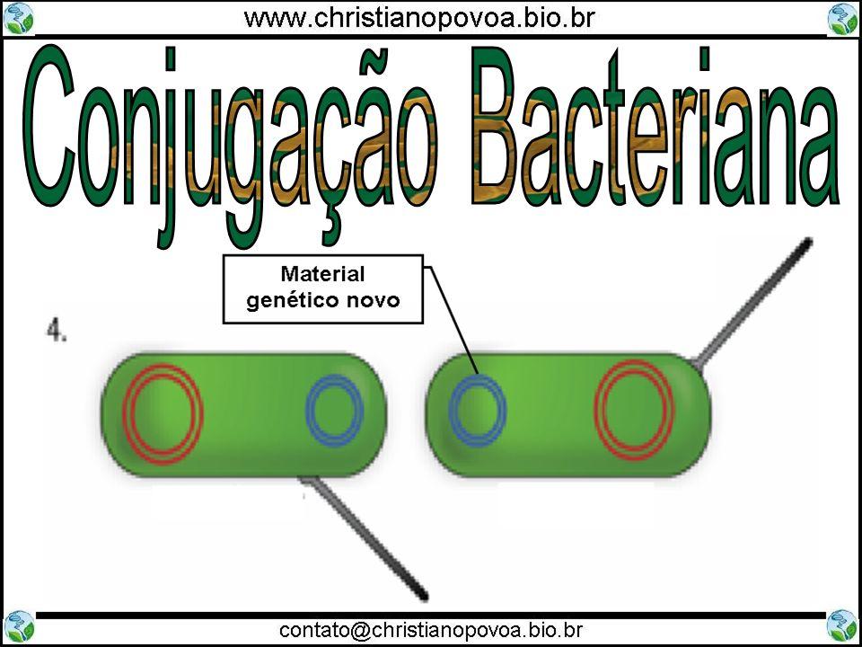 Conjugação Bacteriana