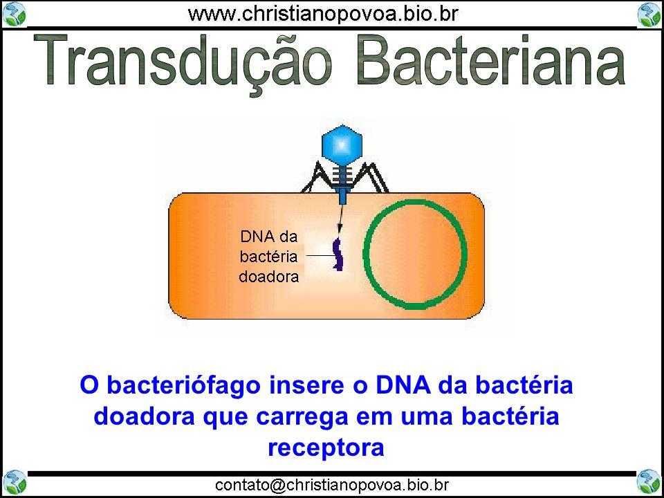 Transdução Bacteriana