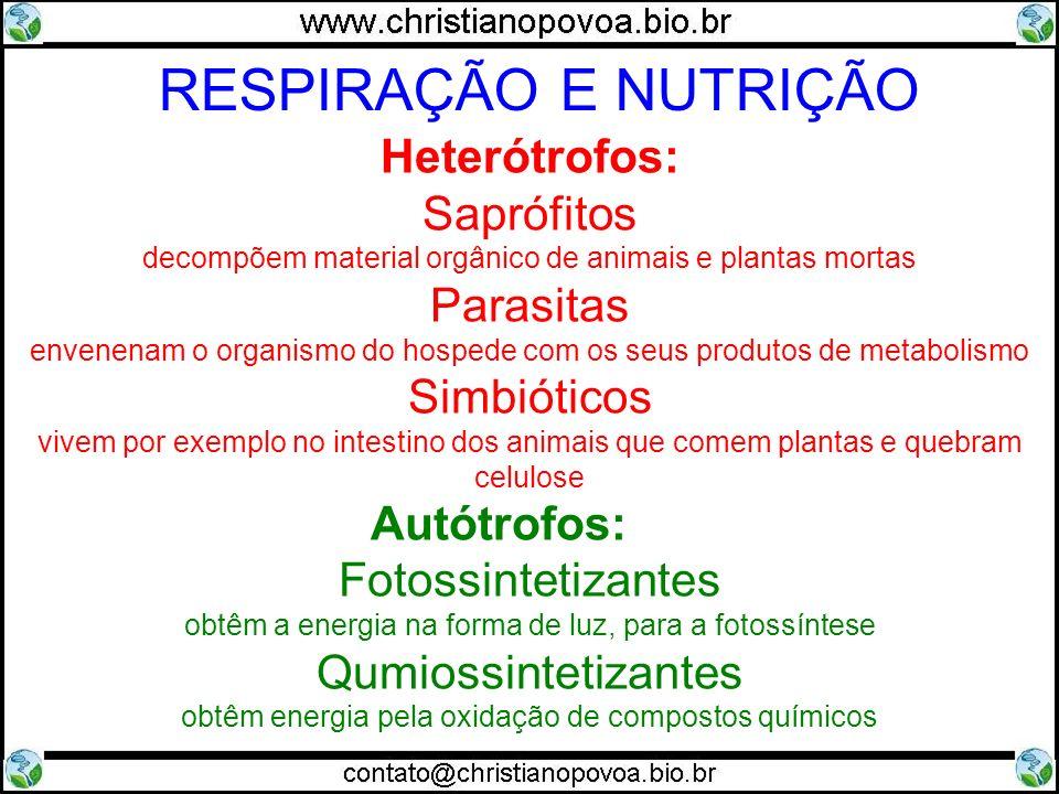RESPIRAÇÃO E NUTRIÇÃO Heterótrofos: Saprófitos Parasitas Simbióticos