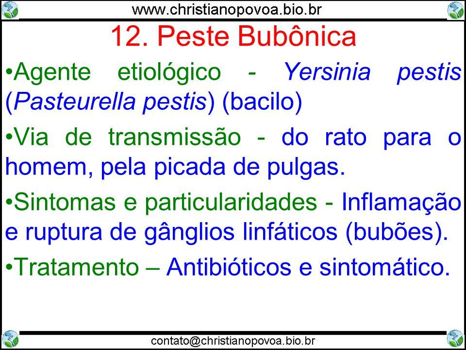 12. Peste Bubônica Agente etiológico - Yersinia pestis (Pasteurella pestis) (bacilo)