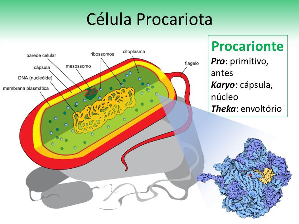 Célula Procariota Procarionte Pro: primitivo, antes