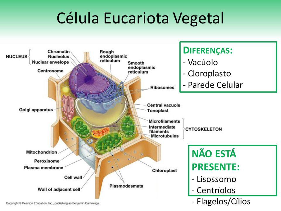 Célula Eucariota Vegetal