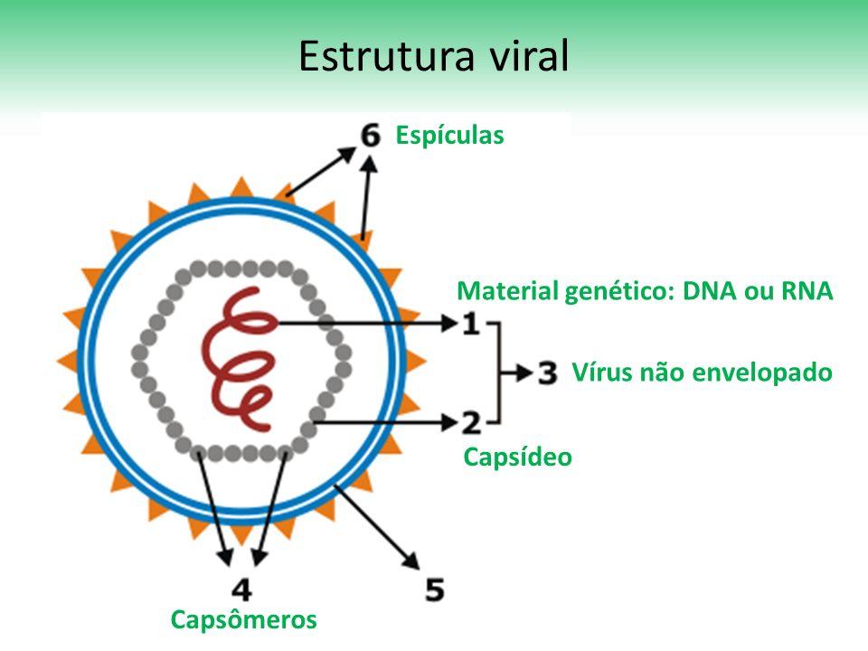 Estrutura viral Espículas Material genético: DNA ou RNA