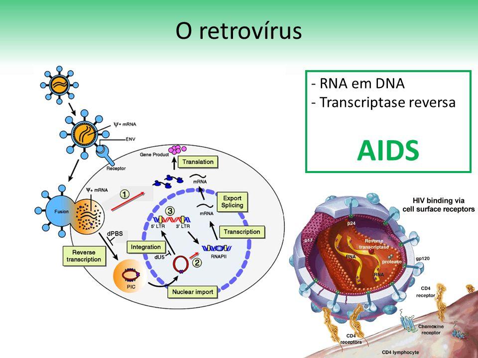 O retrovírus RNA em DNA Transcriptase reversa AIDS