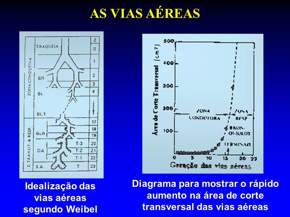 AS VIAS AÉREAS Diagrama para mostrar o rápido aumento na área de corte
