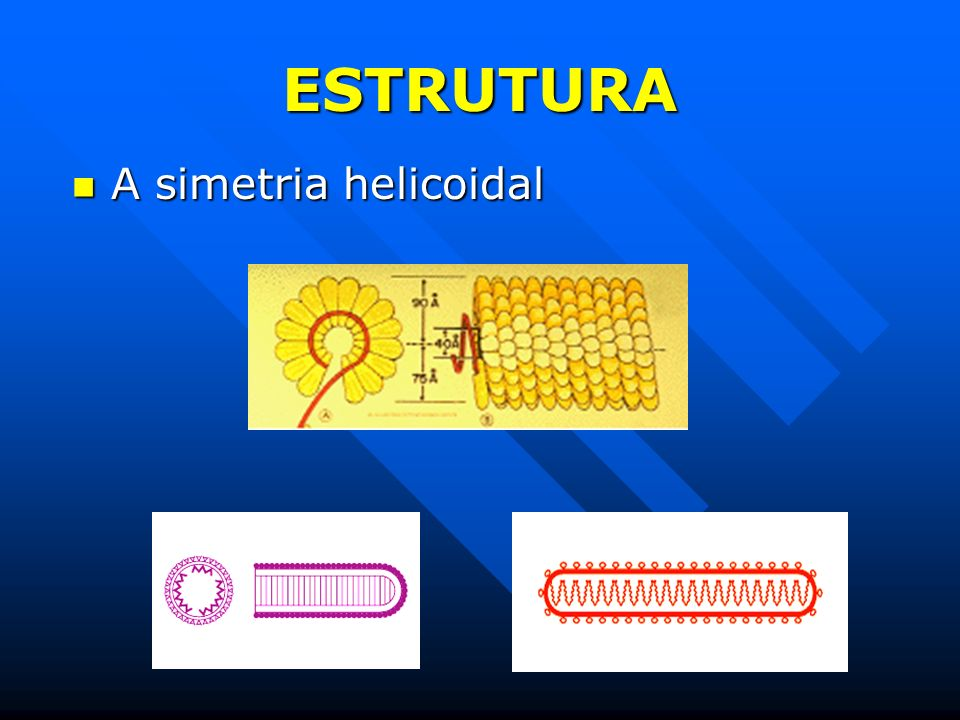 ESTRUTURA A simetria helicoidal