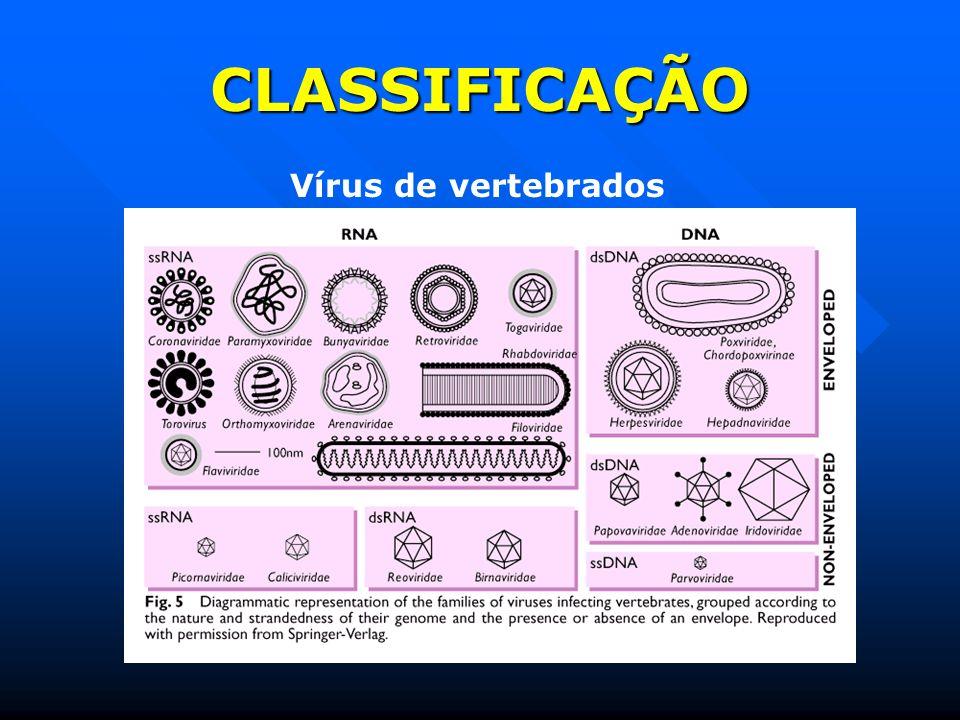 CLASSIFICAÇÃO Vírus de vertebrados