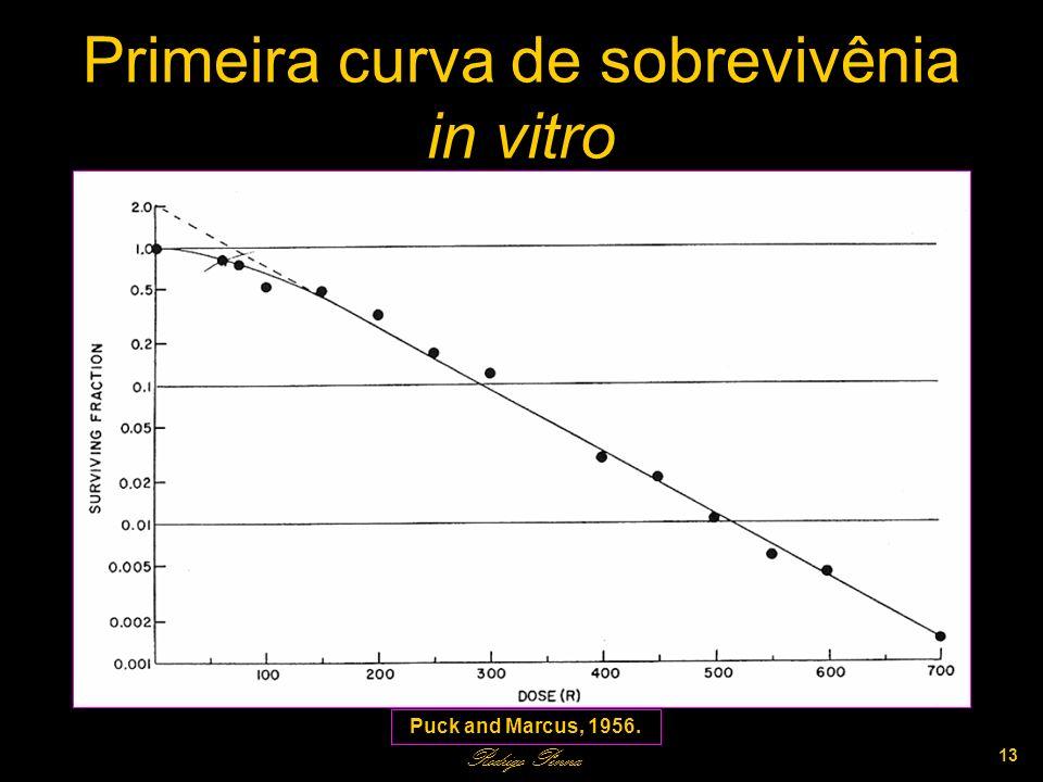 Primeira curva de sobrevivênia in vitro