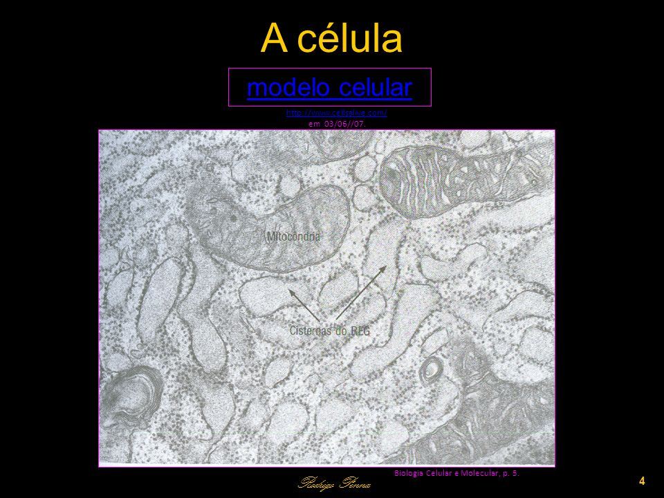 A célula modelo celular Rodrigo Penna