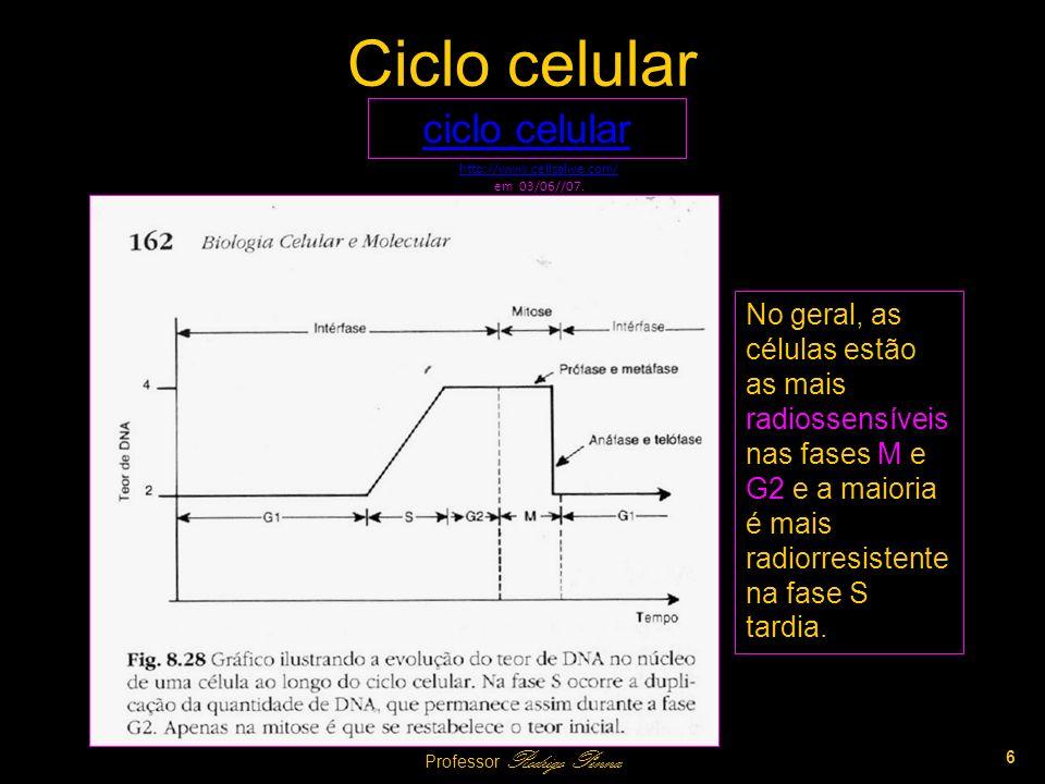 Ciclo celular ciclo celular