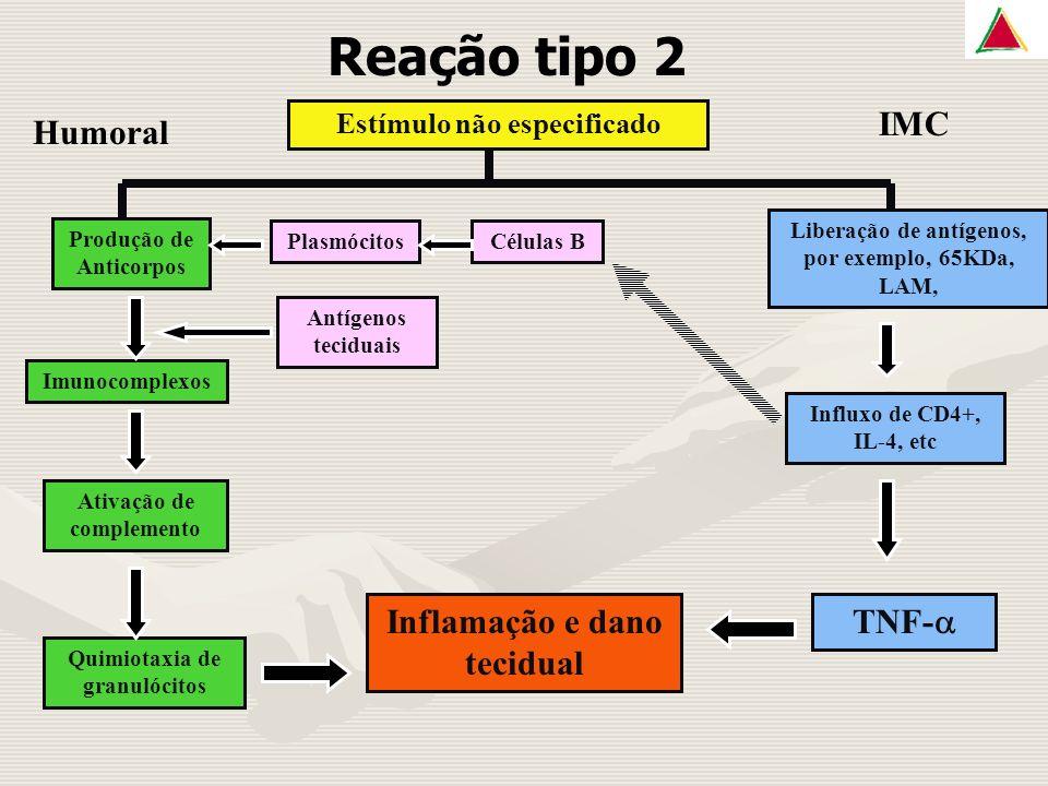 Reação tipo 2 Humoral IMC Inflamação e dano tecidual TNF-a