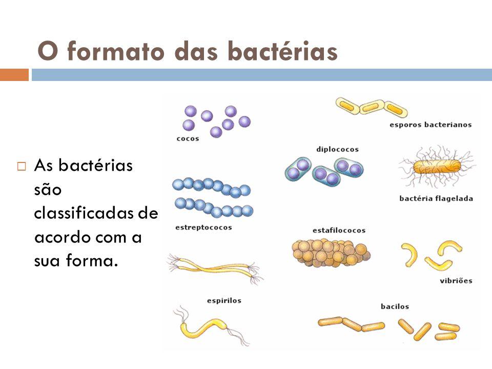 O formato das bactérias