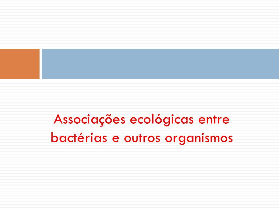 Associações ecológicas entre bactérias e outros organismos