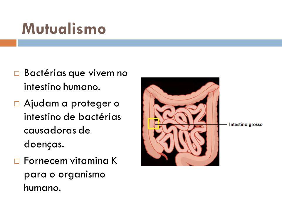 Mutualismo Bactérias que vivem no intestino humano.
