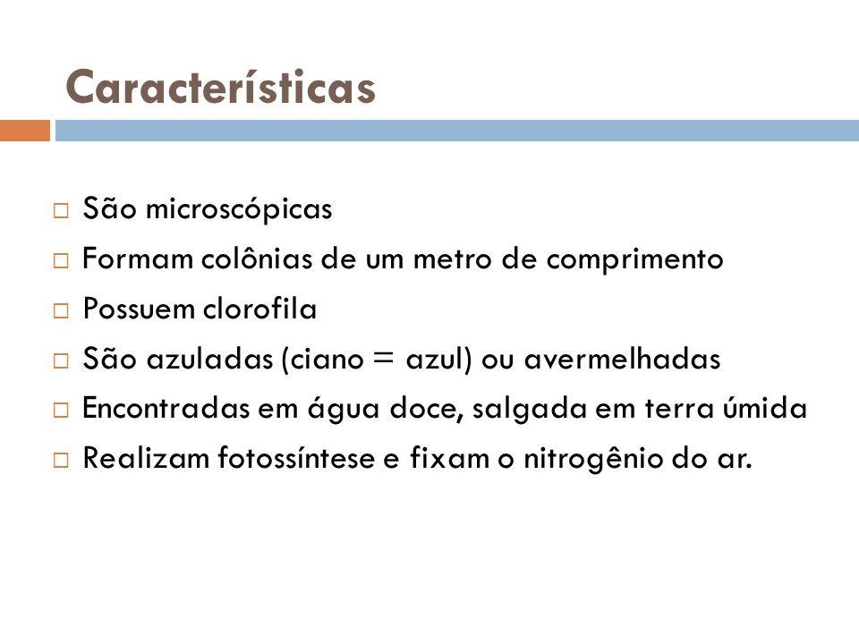 Características São microscópicas