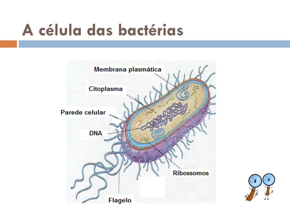 A célula das bactérias