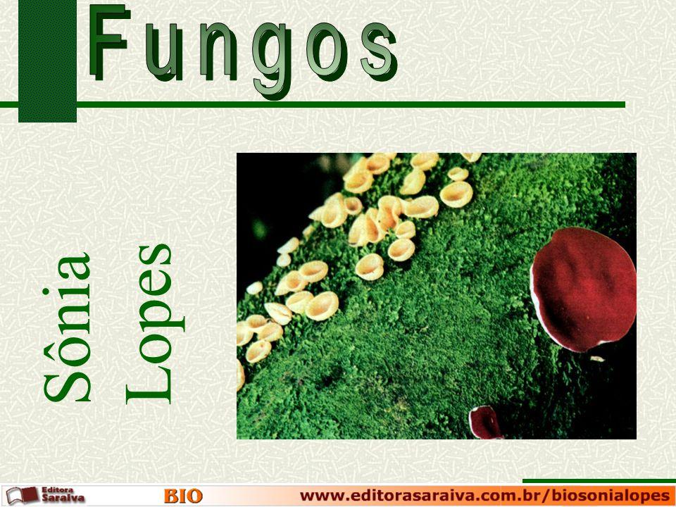 Fungos Sônia Lopes