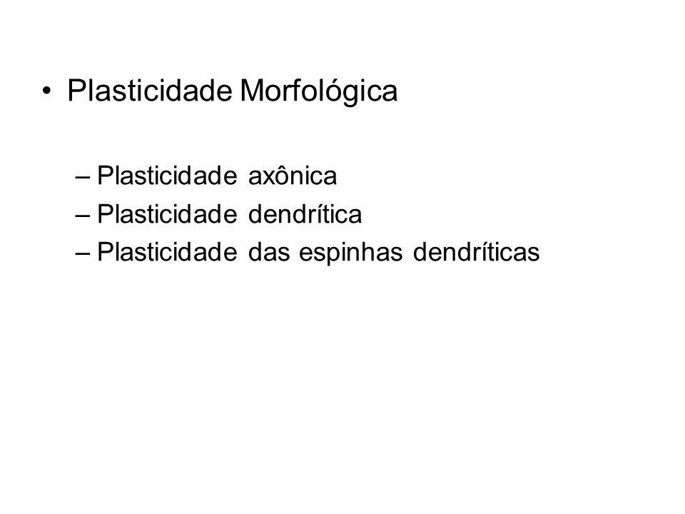 Plasticidade Morfológica