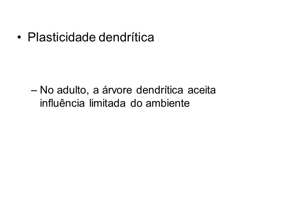 Plasticidade dendrítica