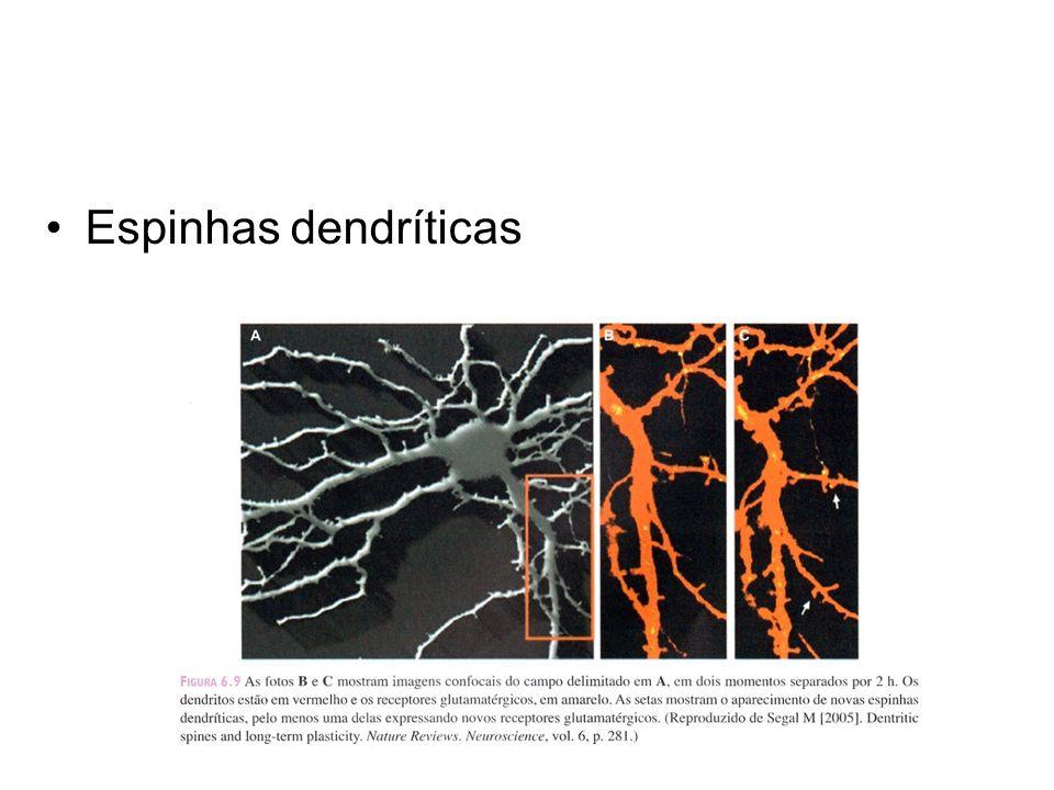 Espinhas dendríticas