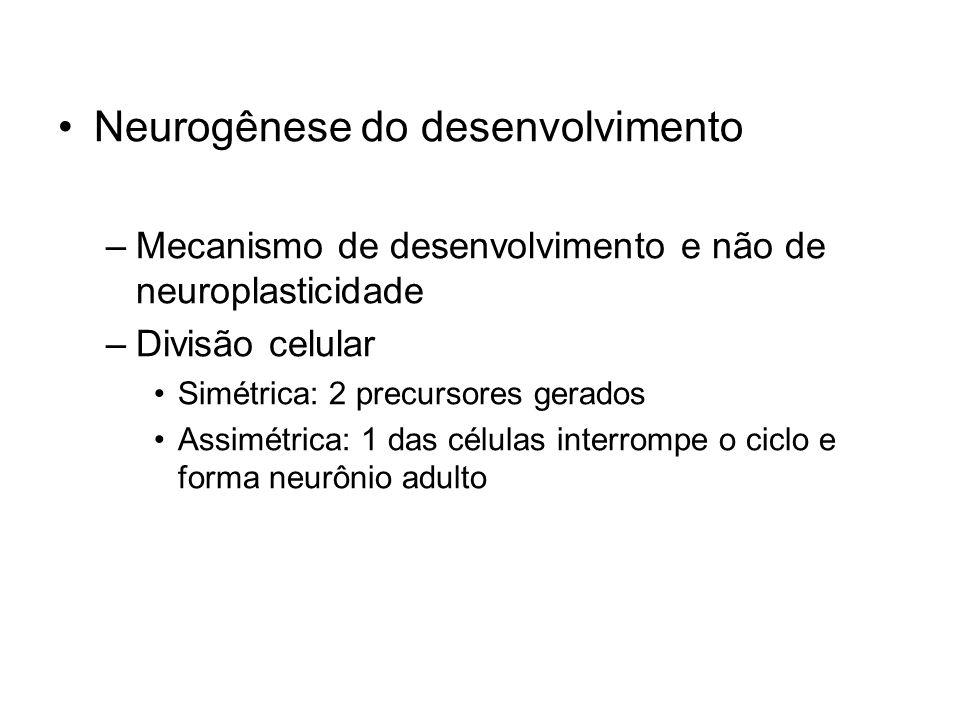 Neurogênese do desenvolvimento