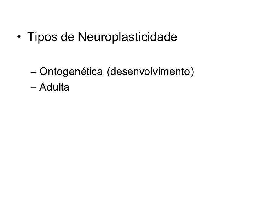 Tipos de Neuroplasticidade