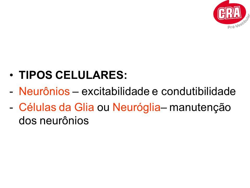 TIPOS CELULARES: Neurônios – excitabilidade e condutibilidade.