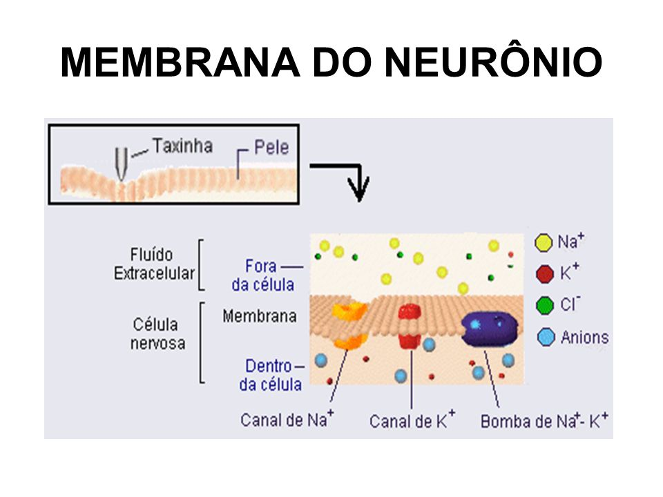 MEMBRANA DO NEURÔNIO