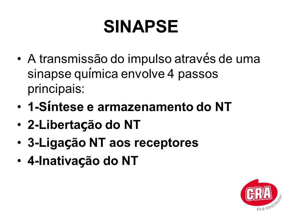 SINAPSE A transmissão do impulso através de uma sinapse química envolve 4 passos principais: 1-Síntese e armazenamento do NT.