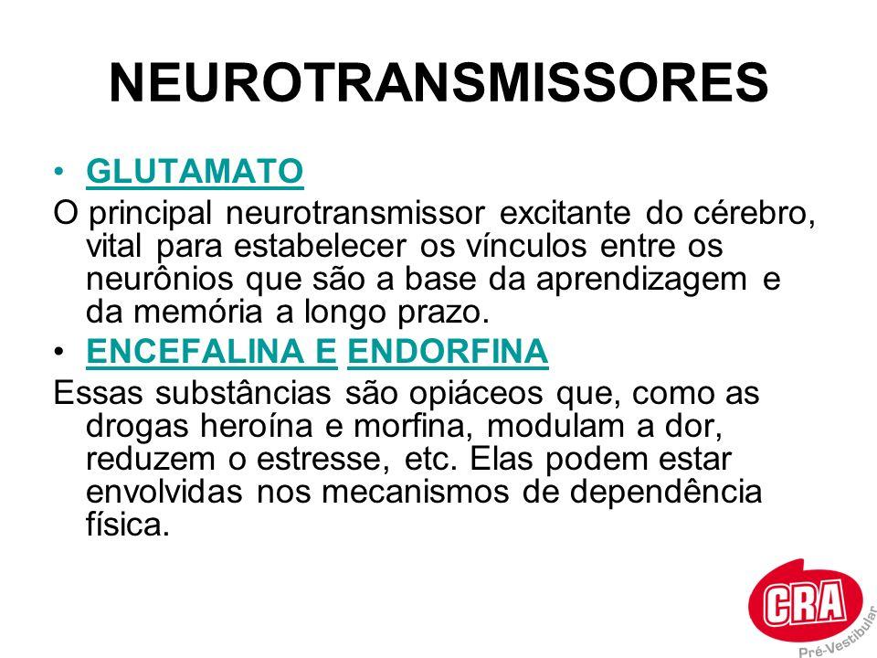 NEUROTRANSMISSORES GLUTAMATO