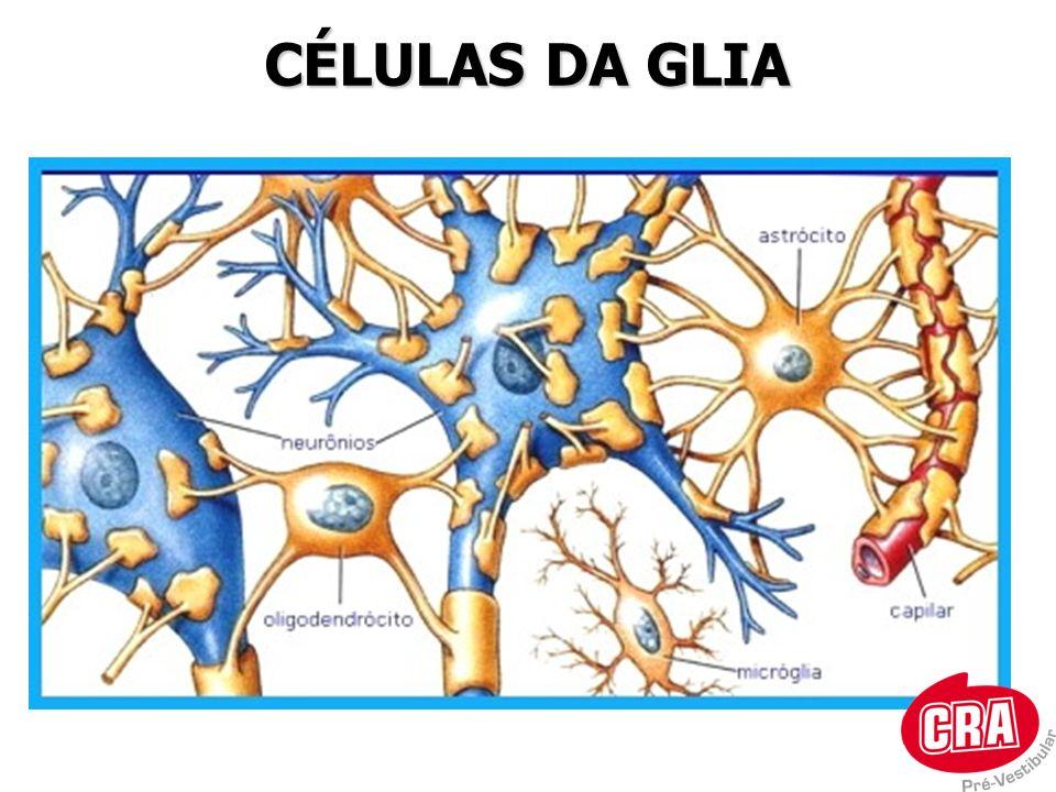 CÉLULAS DA GLIA