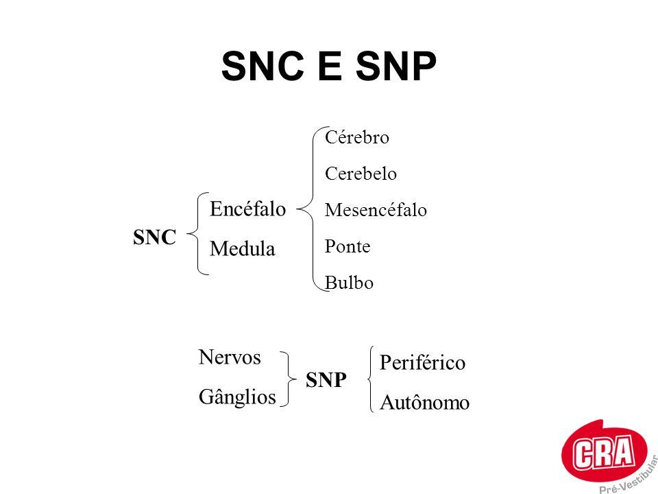 SNC E SNP Encéfalo Medula SNC Nervos Periférico Gânglios Autônomo SNP