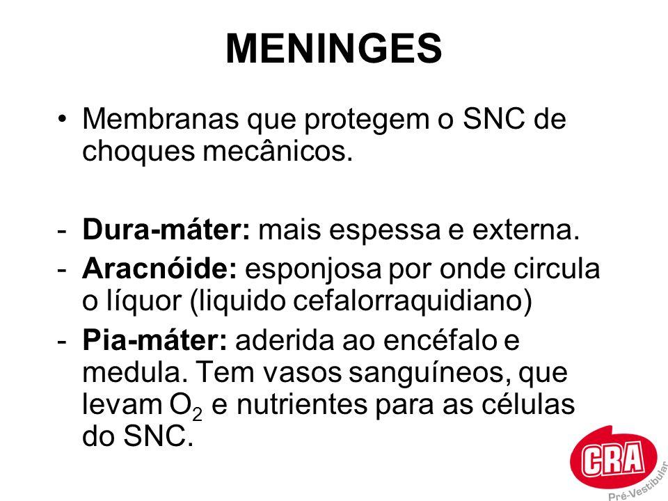 MENINGES Membranas que protegem o SNC de choques mecânicos.