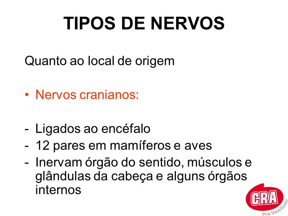 TIPOS DE NERVOS Quanto ao local de origem Nervos cranianos: