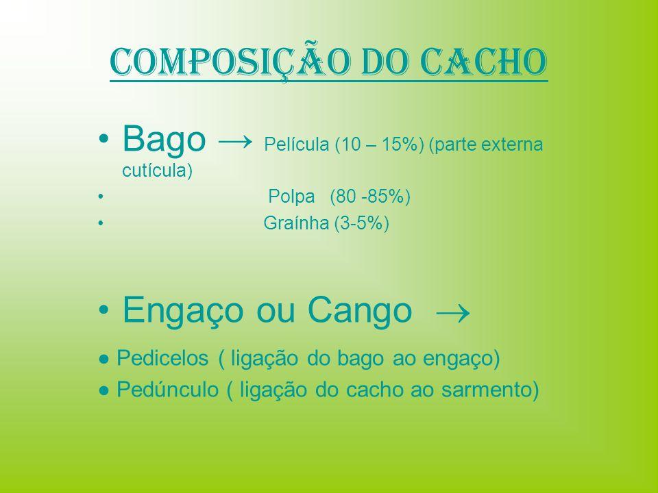 Composição do Cacho Bago → Película (10 – 15%) (parte externa cutícula) Polpa (80 -85%) Graínha (3-5%)