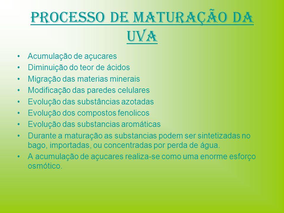 Processo de Maturação da Uva