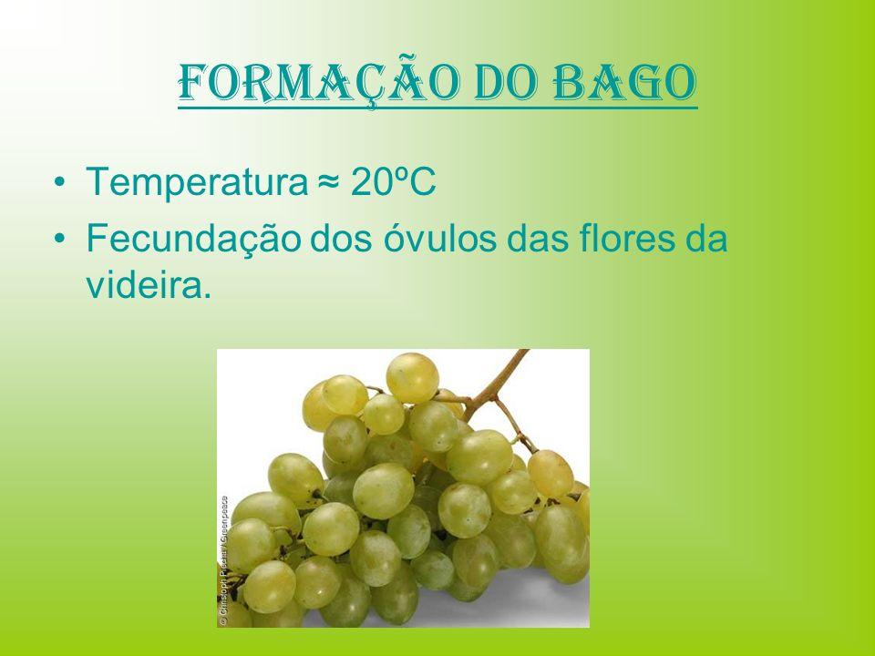 Formação do Bago Temperatura ≈ 20ºC