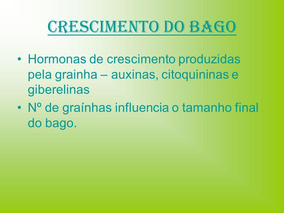 Crescimento do Bago Hormonas de crescimento produzidas pela grainha – auxinas, citoquininas e giberelinas.