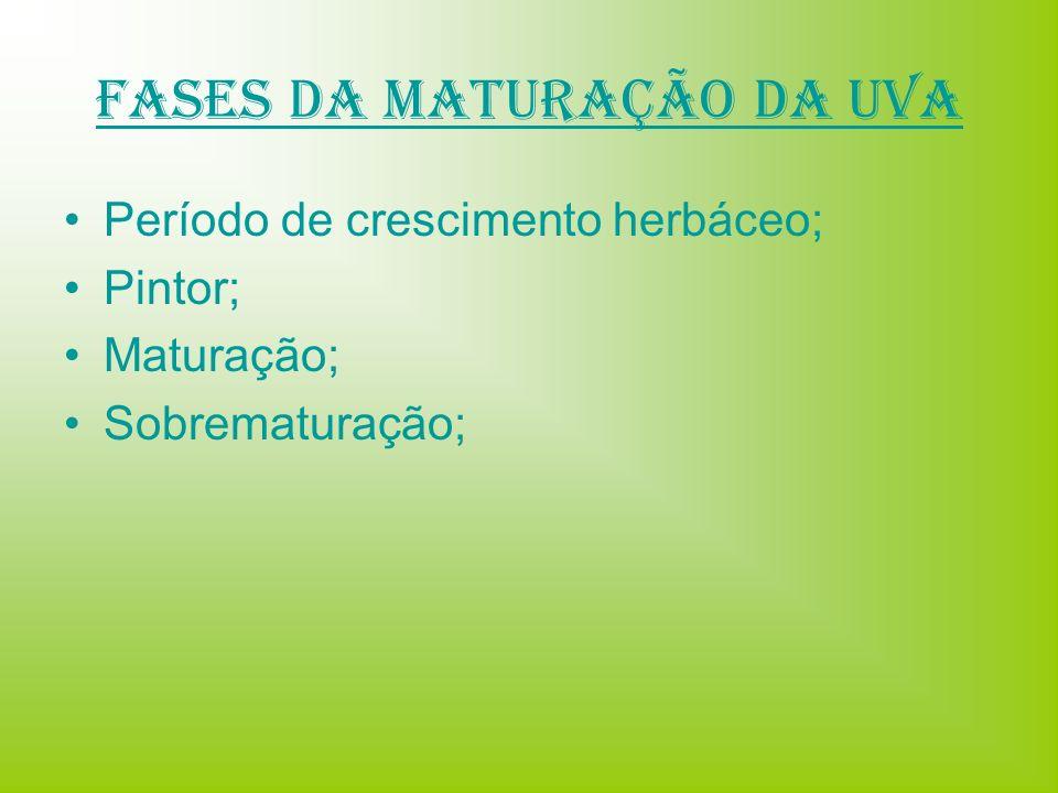 Fases da Maturação da uva