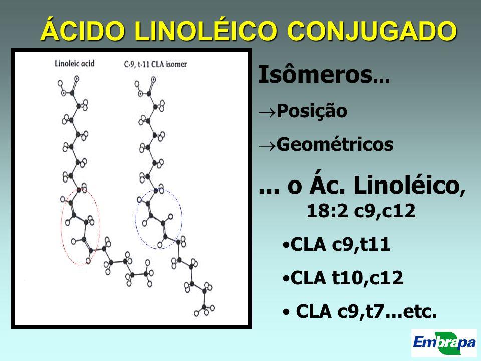 ÁCIDO LINOLÉICO CONJUGADO