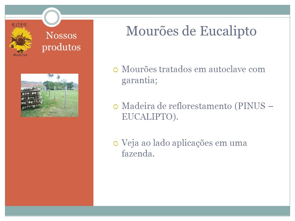 Mourões de Eucalipto Nossos produtos