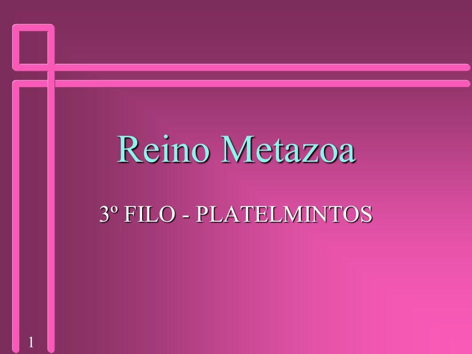 Reino Metazoa 3º FILO - PLATELMINTOS