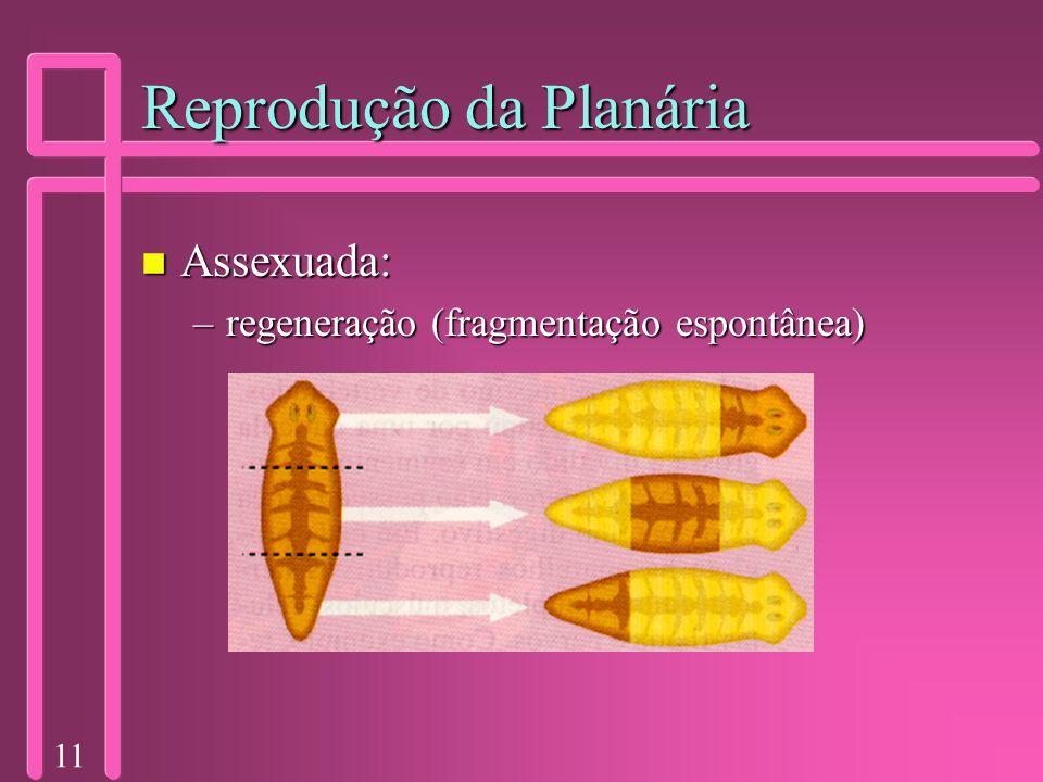 Reprodução da Planária