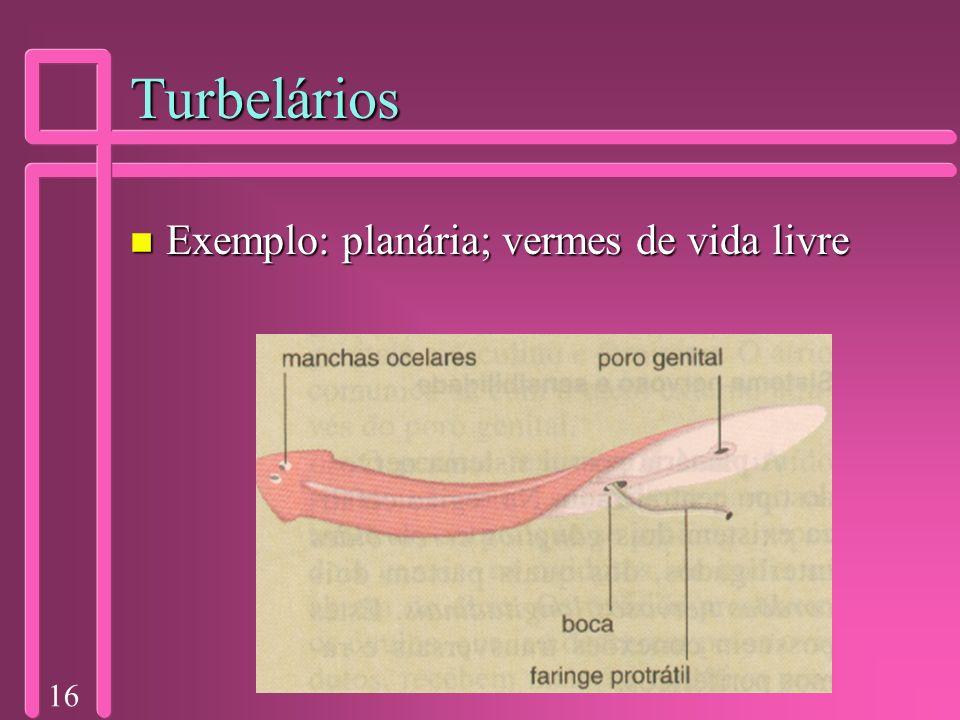 Turbelários Exemplo: planária; vermes de vida livre